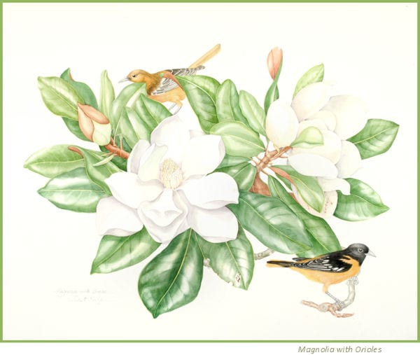 Botanical Watercolor image by Juliet Kirby